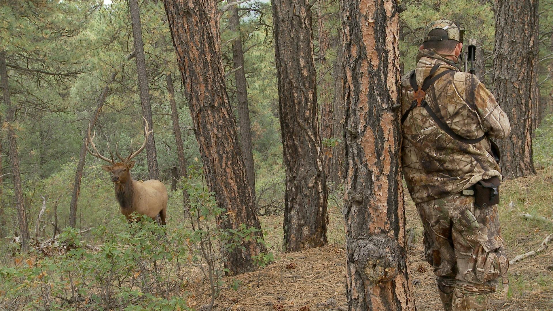 Quartering to Shot on Elk 1920x1080