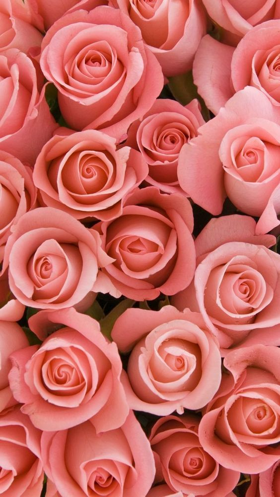 45 Beautiful Roses Wallpaper Backgrounds For iPhone Beautiful 564x1002