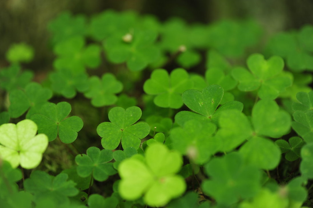 Four leaf clover Wallpaper by pohlmannmark 1095x729