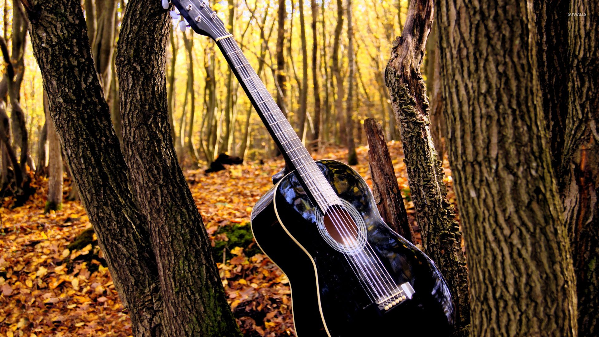 Cool Country Guitar Wallpaper In The Forest Pictures 1920x1080