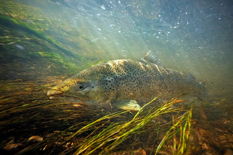 Fly Fishing Stock Photography Images 800x531