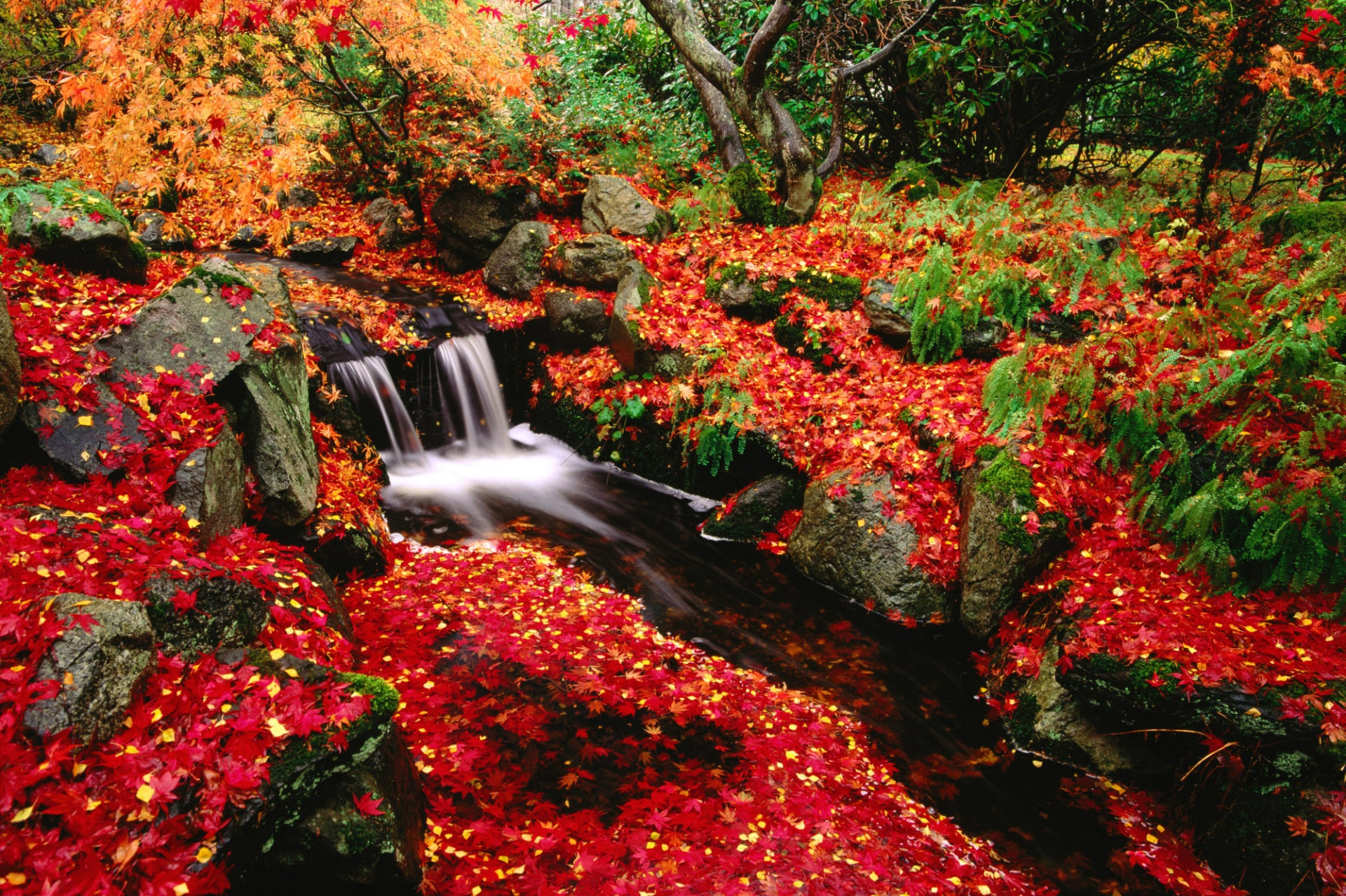 1920x1200 Red leaves desktop PC and Mac wallpaper 1920x1279