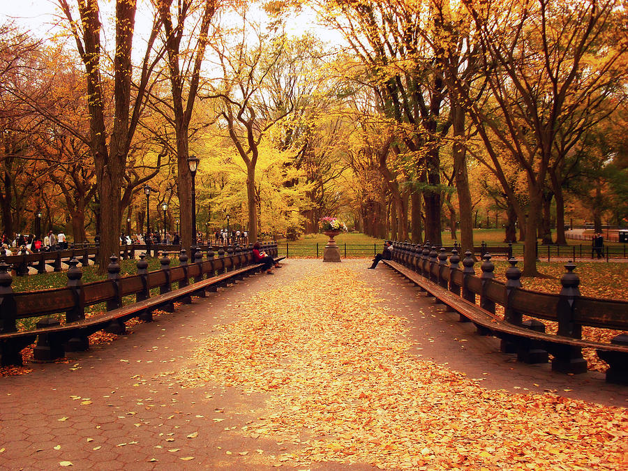 Autumn   Central Park   New York City by Vivienne Gucwa 900x675