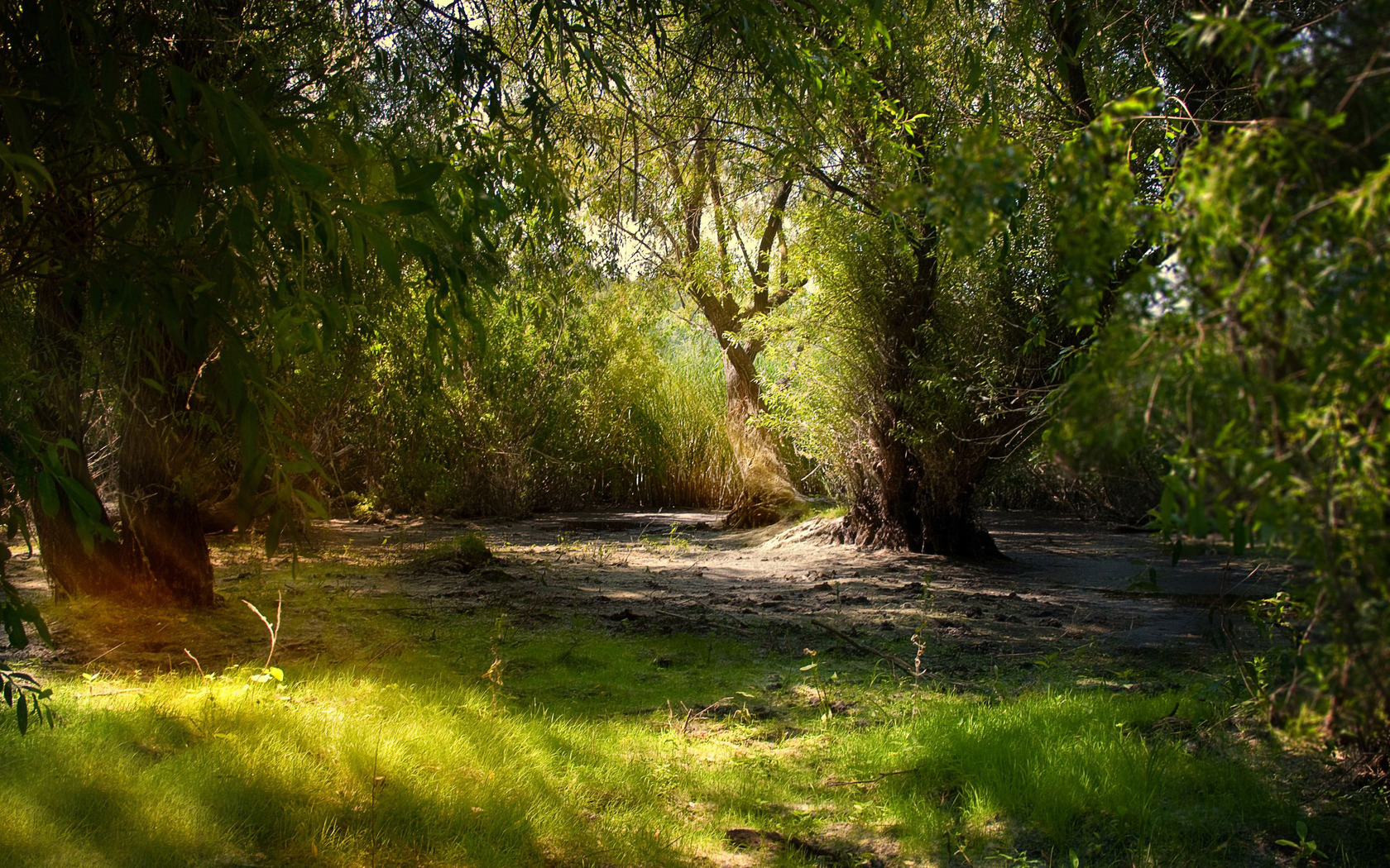Willows in the swamp Widescreen Wallpaper   5832 1680x1050