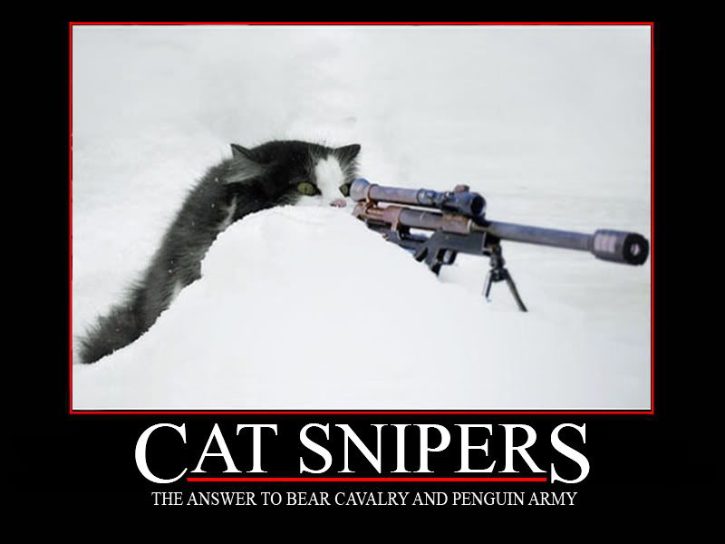 Cat Sniper Graphics Code Cat Sniper Comments Pictures 800x600
