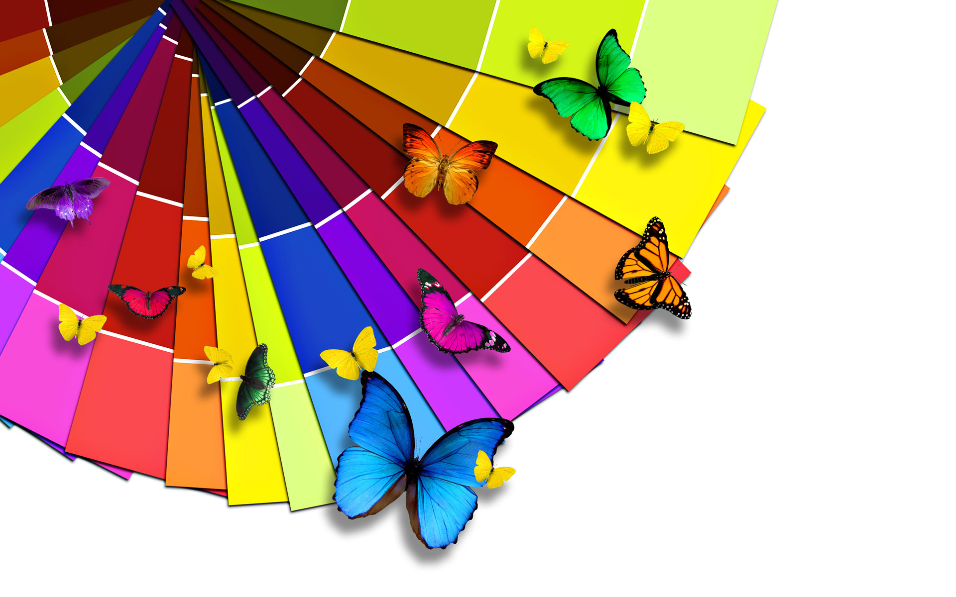 Colorful Butterflies Wallpapers HD Wallpapers 1920x1200
