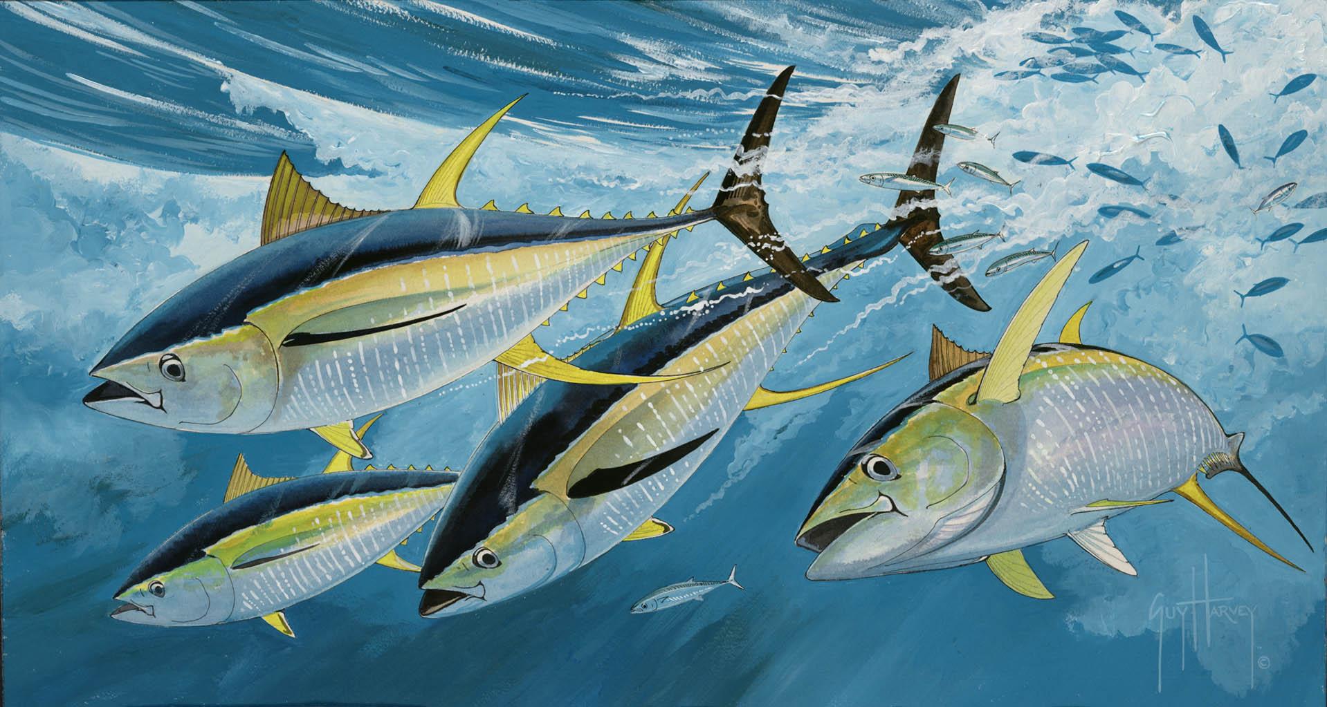 86+] Tuna Wallpapers on WallpaperSafari
