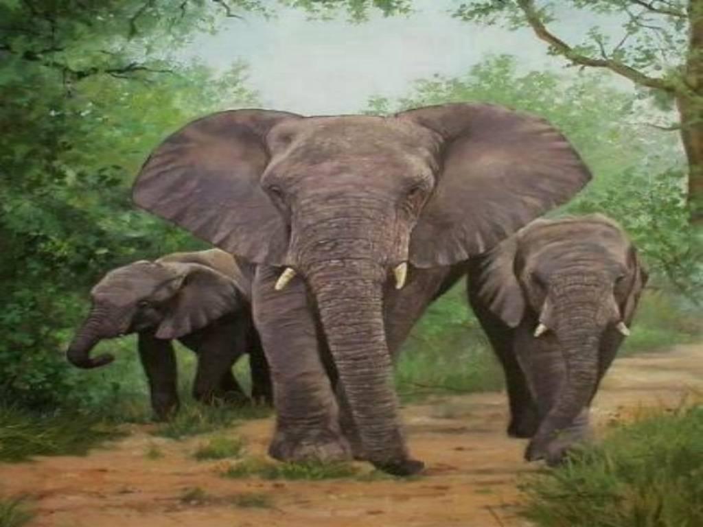 72+ Elephant Desktop Backgrounds on WallpaperSafari