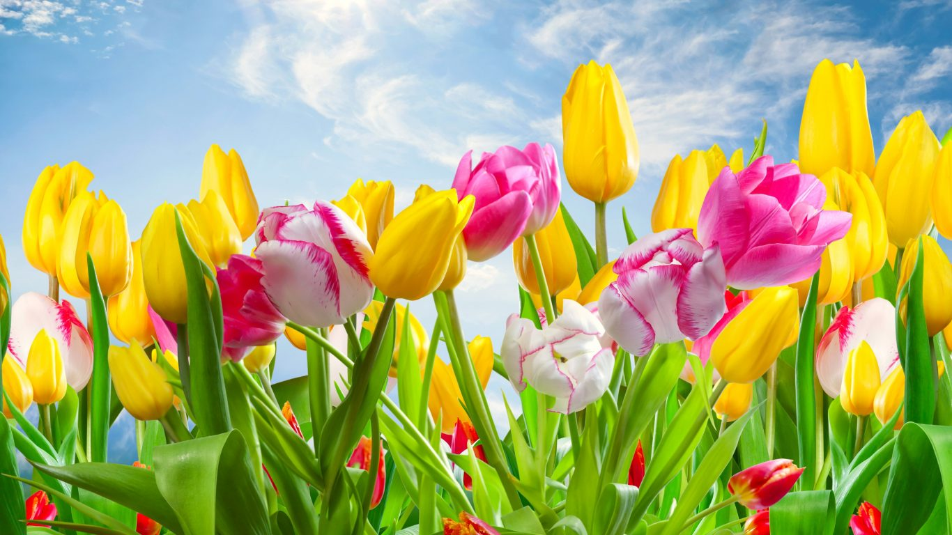 Top Spring Flowers Wallpaper Full Wallpapers 1366x768