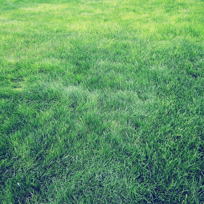 FREEIOS7 grass   parallax HD iPhone iPad wallpaper 2448x2448