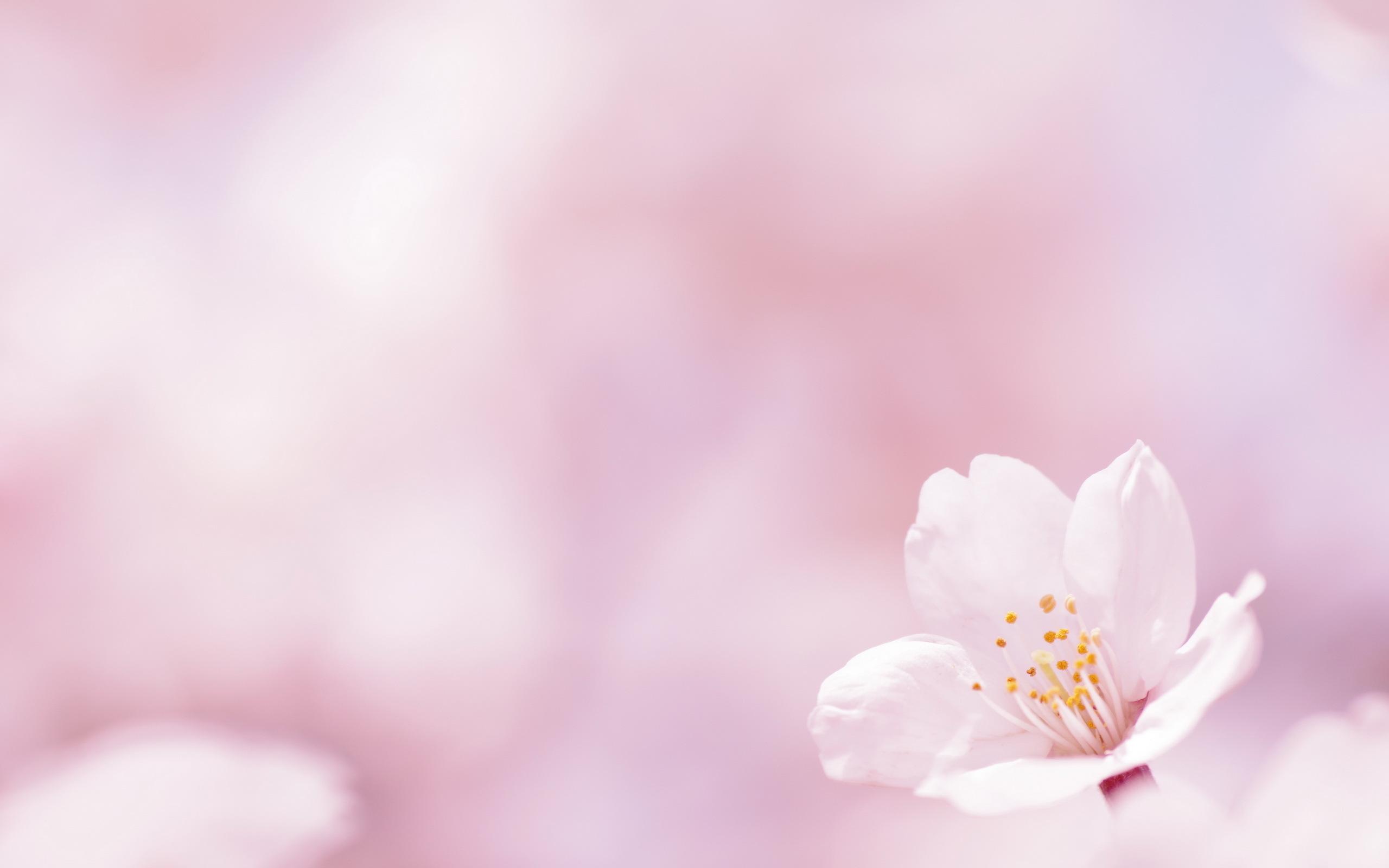 Free Pink Flower Wallpaper - WallpaperSafari