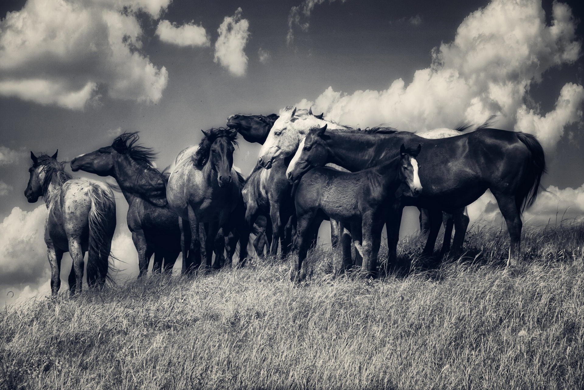 Horse horses herd meadow clouds black and white wallpaper 1920x1282 1920x1282