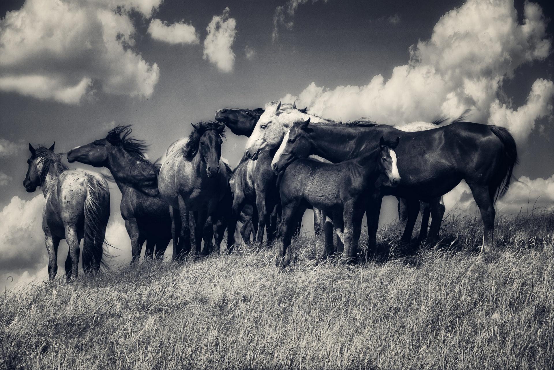 Фото табун лошадей