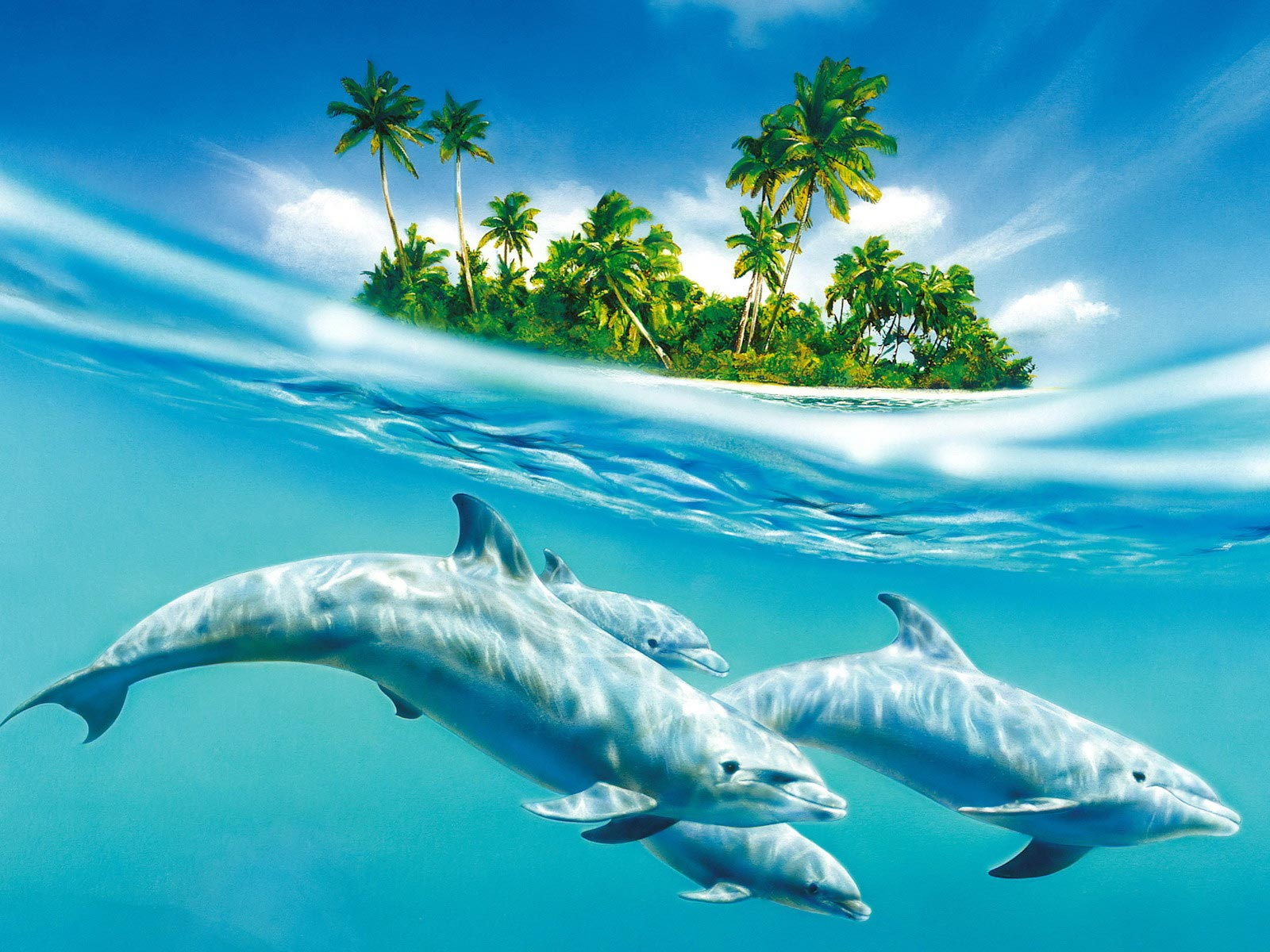 hd Blue Dolphins Wallpaper High Quality WallpapersWallpaper 1600x1200