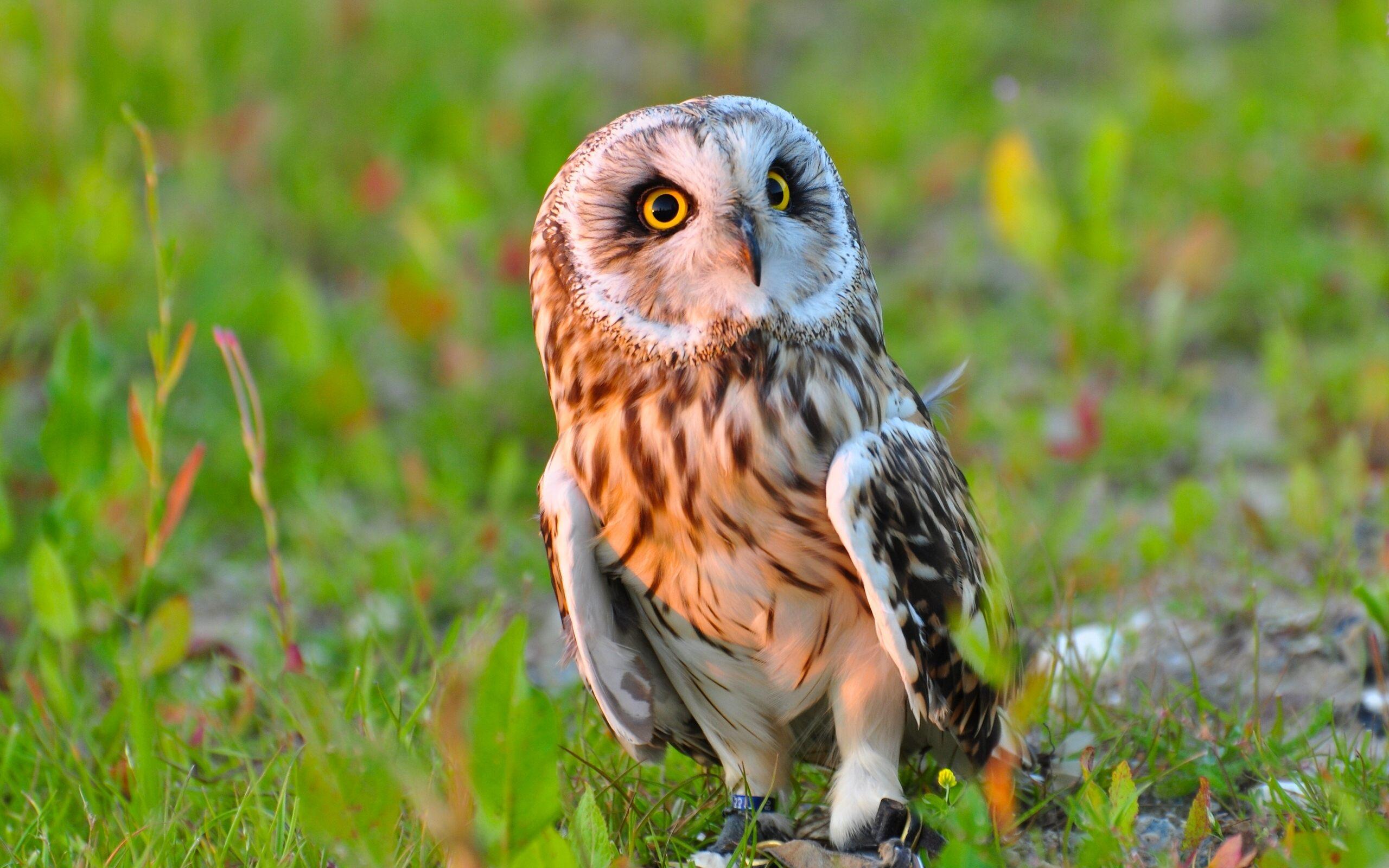[71+] Cute Owl Wallpapers On WallpaperSafari