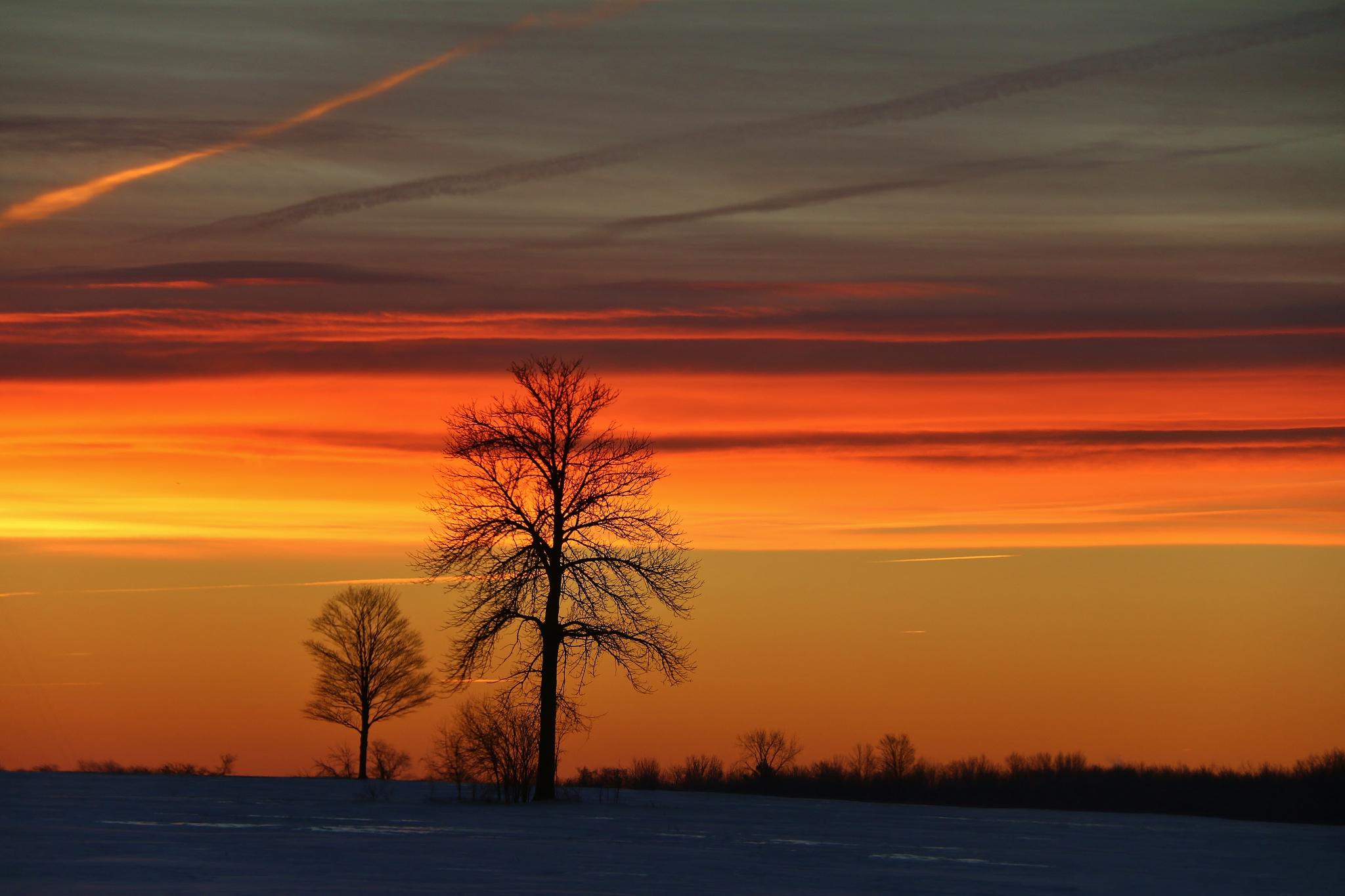 Wallpaper trees winter morning sunrise wallpapers landscapes