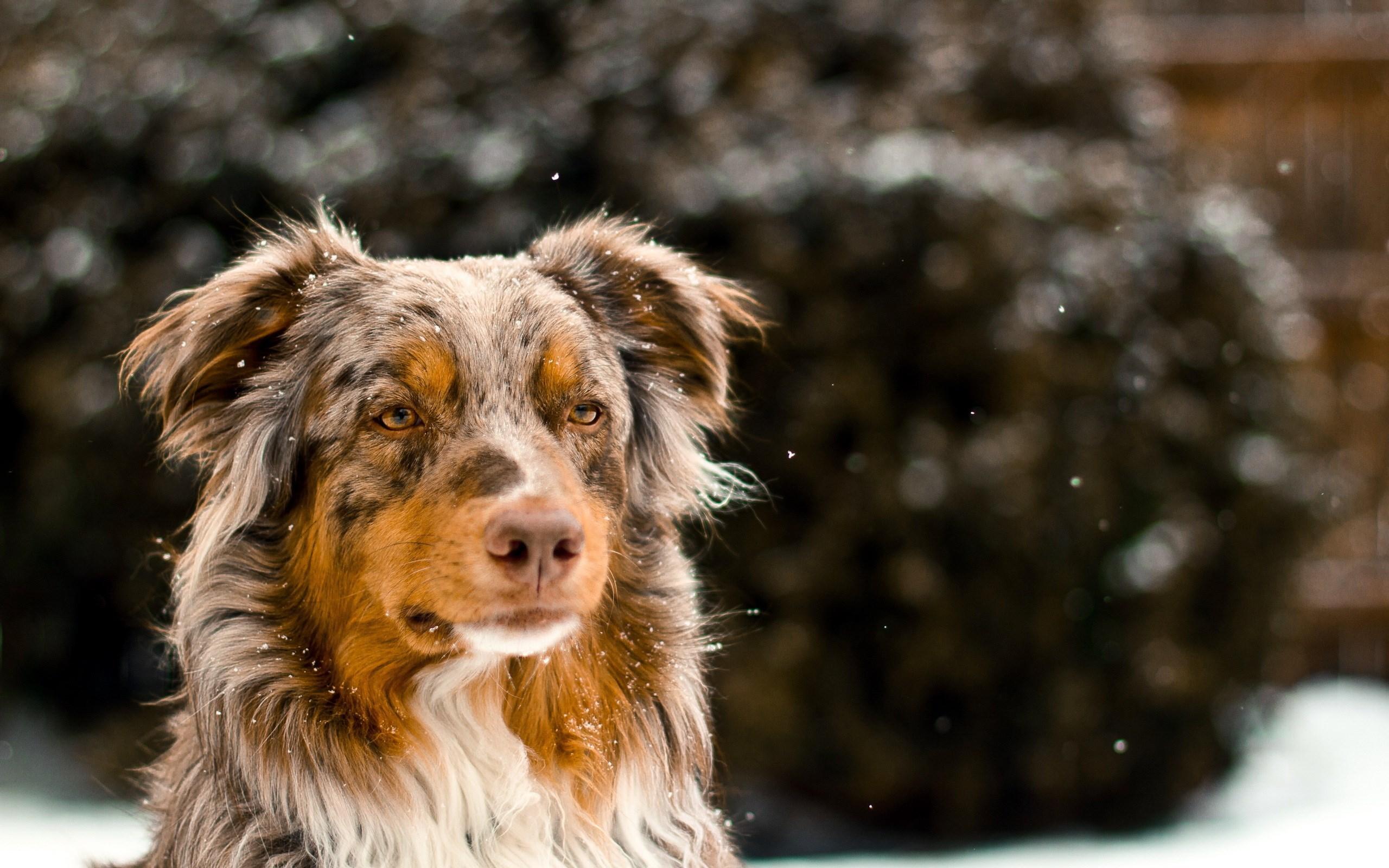 Dogs Winter Wallpaper   Wallpaper High Definition High Quality 2560x1600