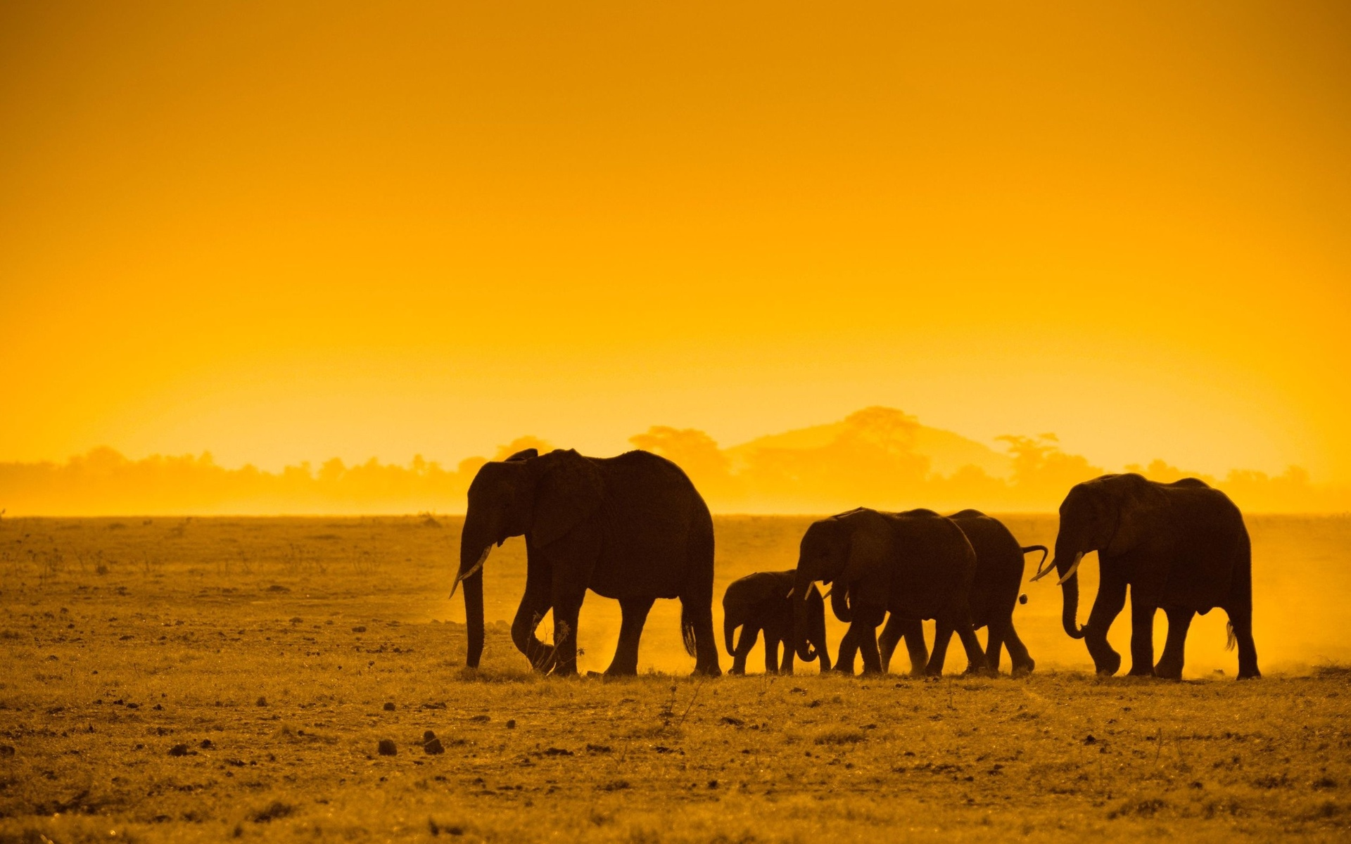 1920x1200 Elephant Leadership Herd Of Elephants 1920x1200