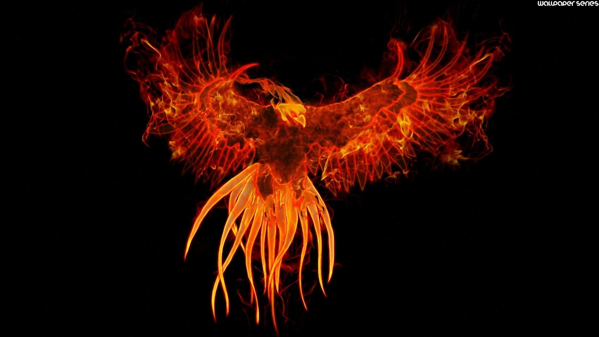 Phoenix Bird 22 Widescreen Wallpaper Wallpaper 1920x1080