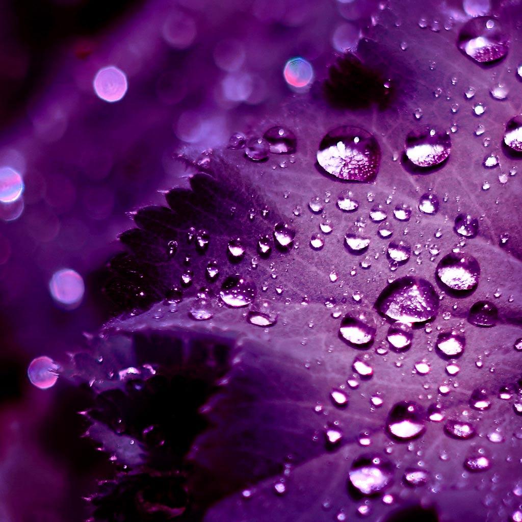 Purple Wallpaper HD Purple Wallpaper Designs 1024x1024
