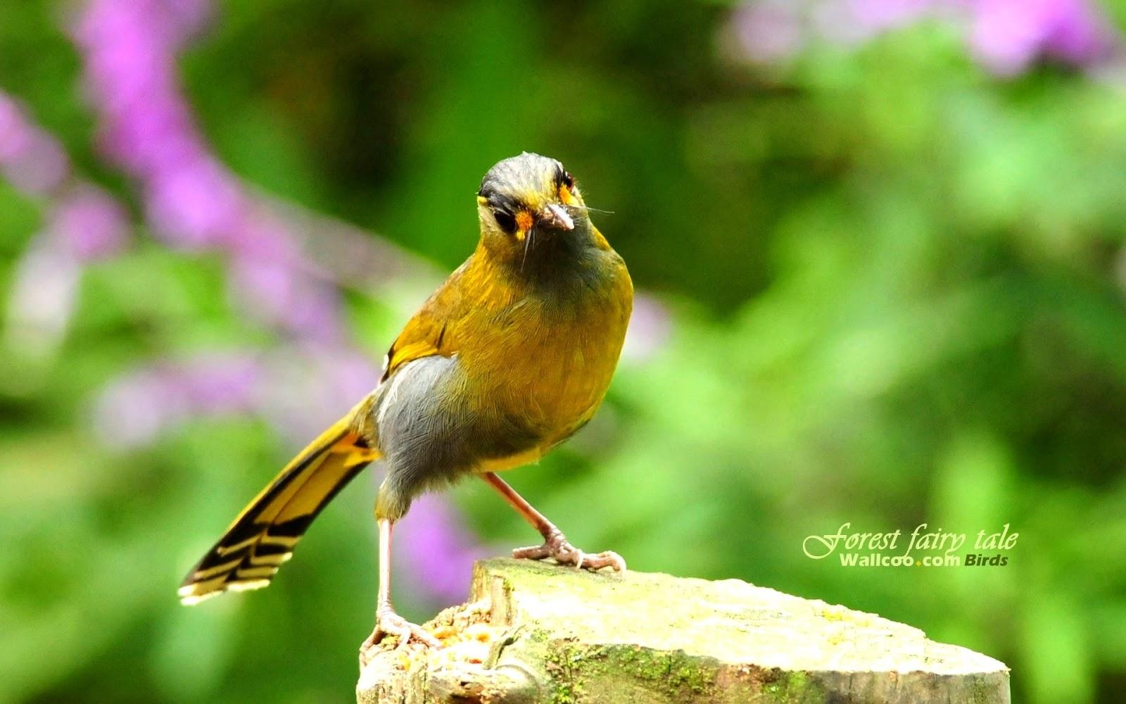 beautifulbirdswallpapers hddesktopwallpapers birdsimages birds 1600x1000