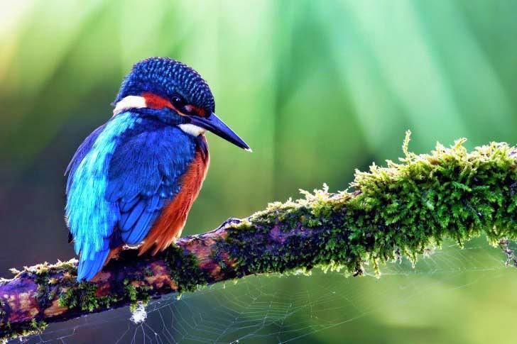 40 Beautiful Birds Wallpapers HD Tinydesignr 728x485