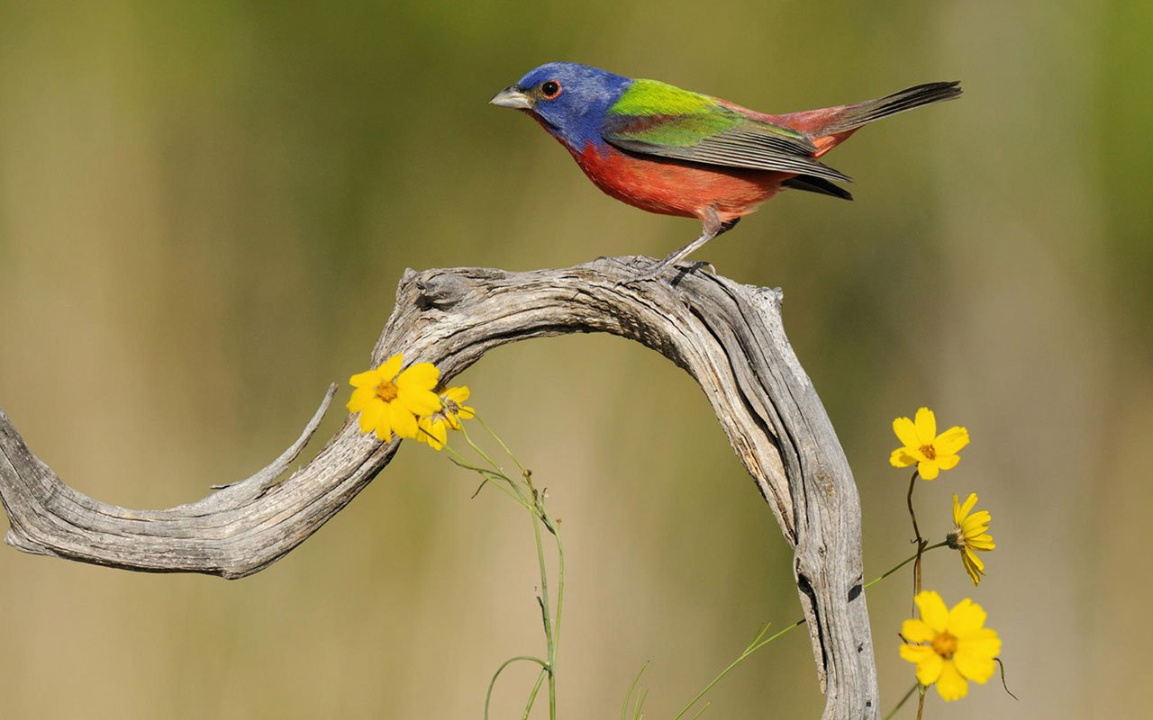 Lovely spring bird photography wallpaper 5 Animal Wallpapers 1280x800