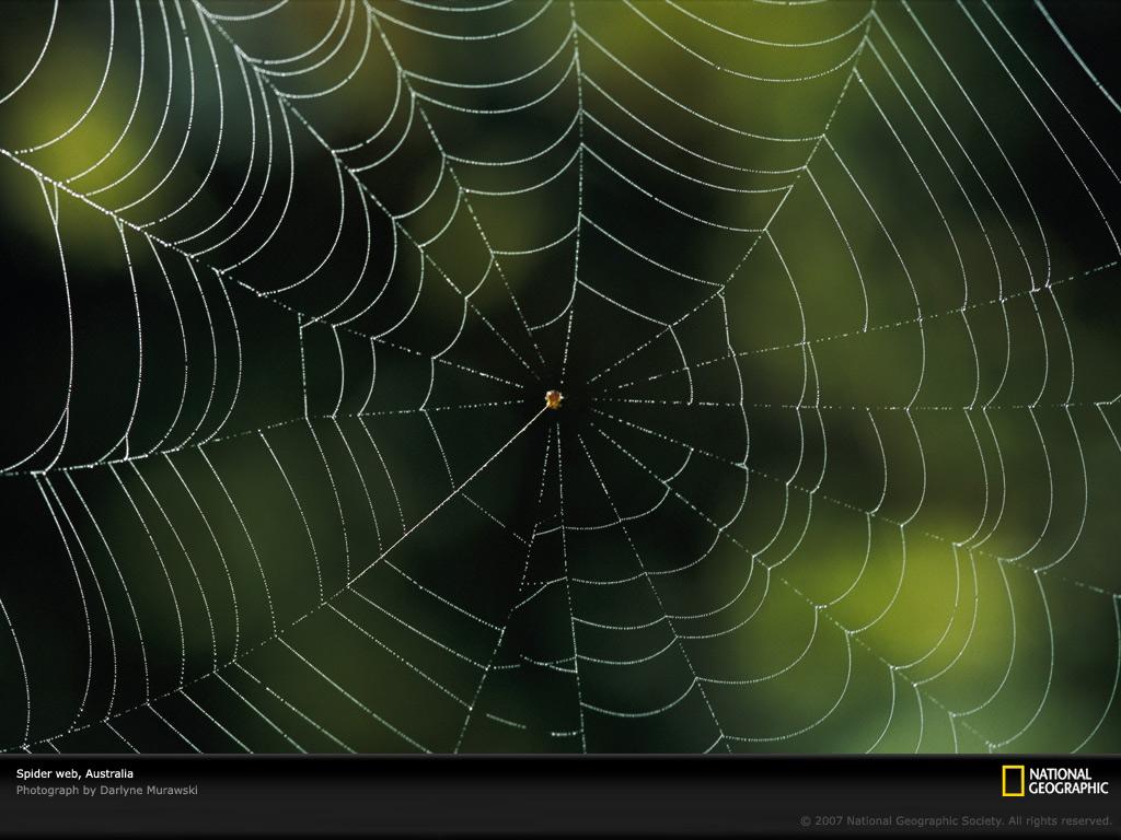 Spider Web Photo Spider Web Wallpaper Download Photos    National 1024x768
