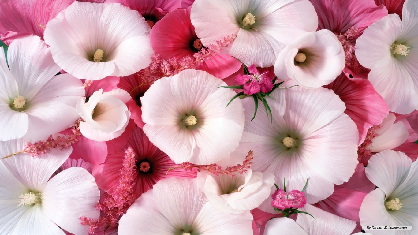 download of flowers wallpapers  wallpaper hd, Beautiful flower