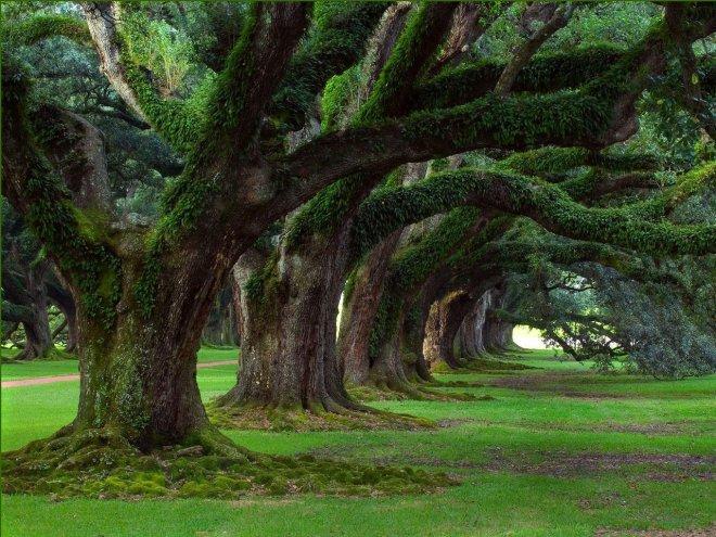 beautiful tree wallpaper 660x495