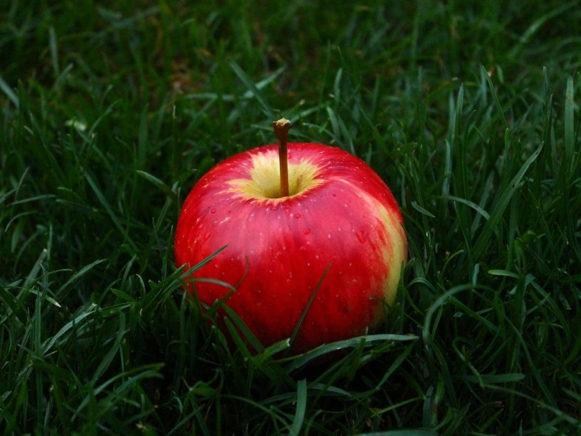 Download Wallpaper 1152x864 Apple Fruit Grass 1152x864 1152x864