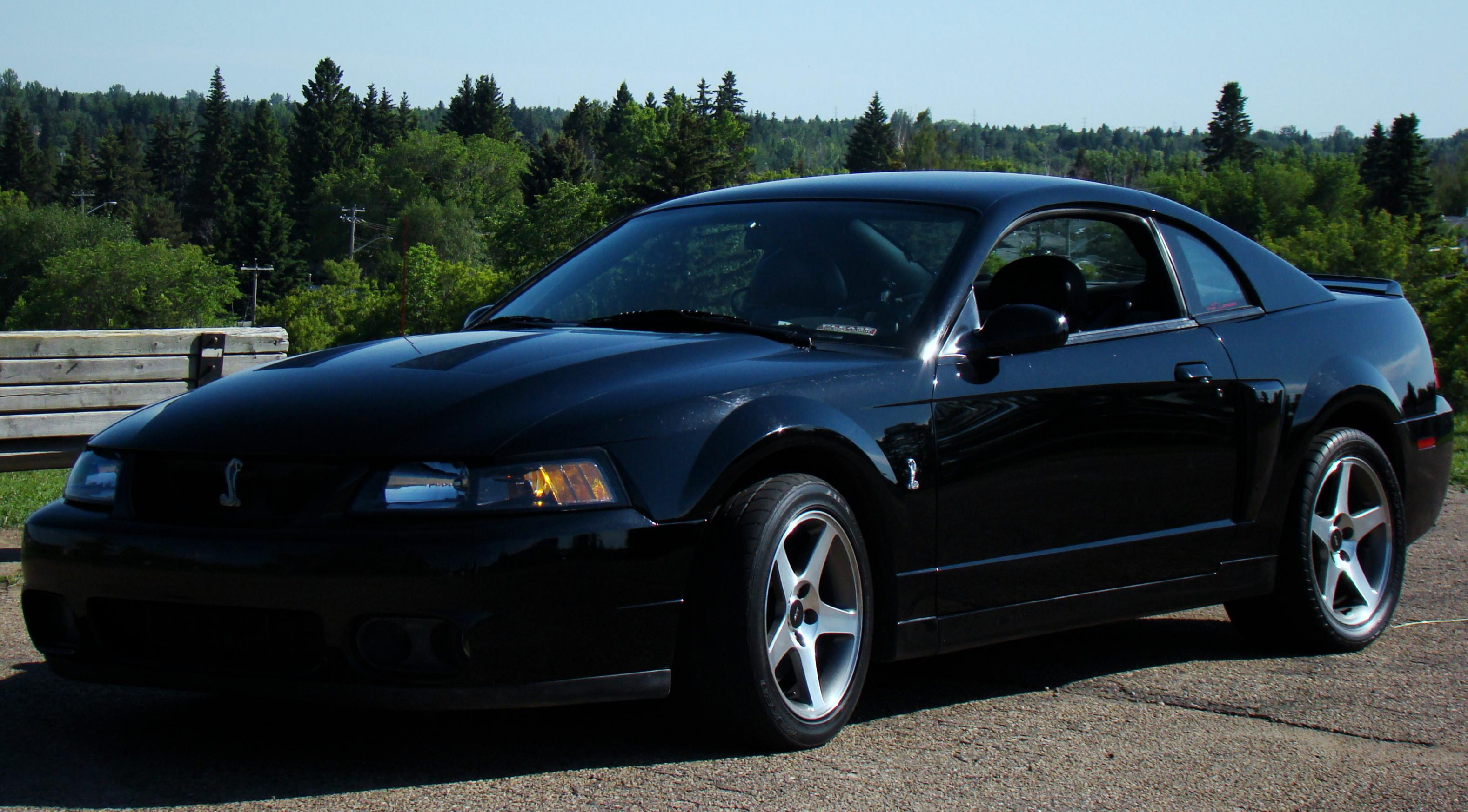 2003 mustang cobra pictures are up ford mustang forum