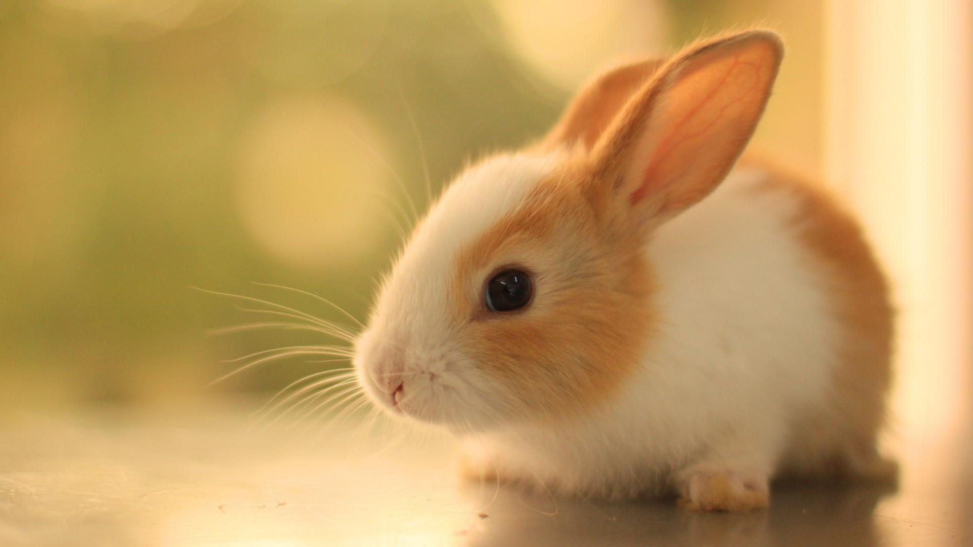 Cute Bunny Wallpapers   Top Cute Bunny Backgrounds 1920x1080