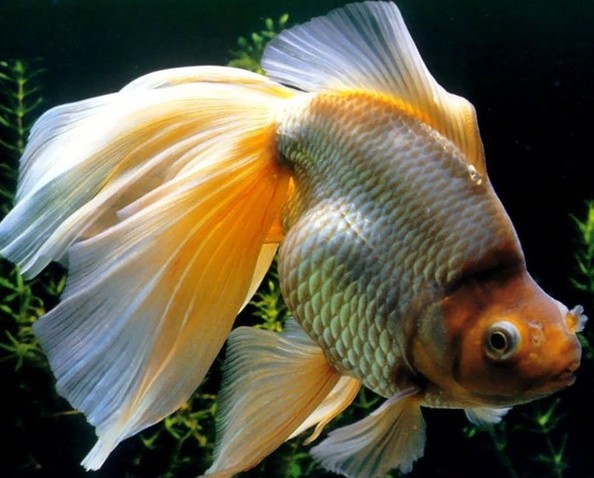 Moving fish bowl wallpaper wallpapersafari for 3d fish wallpaper