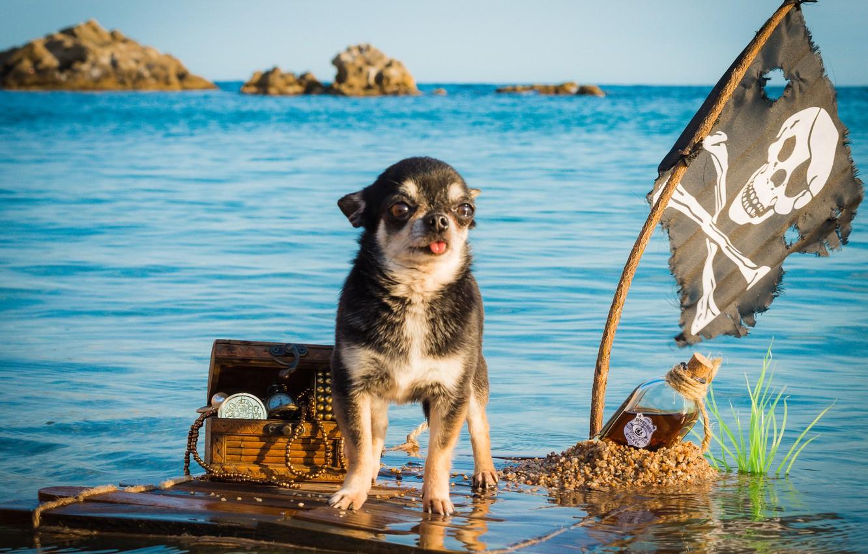 Wallpaper sea bottle dog flag pirate captain chest 1332x850