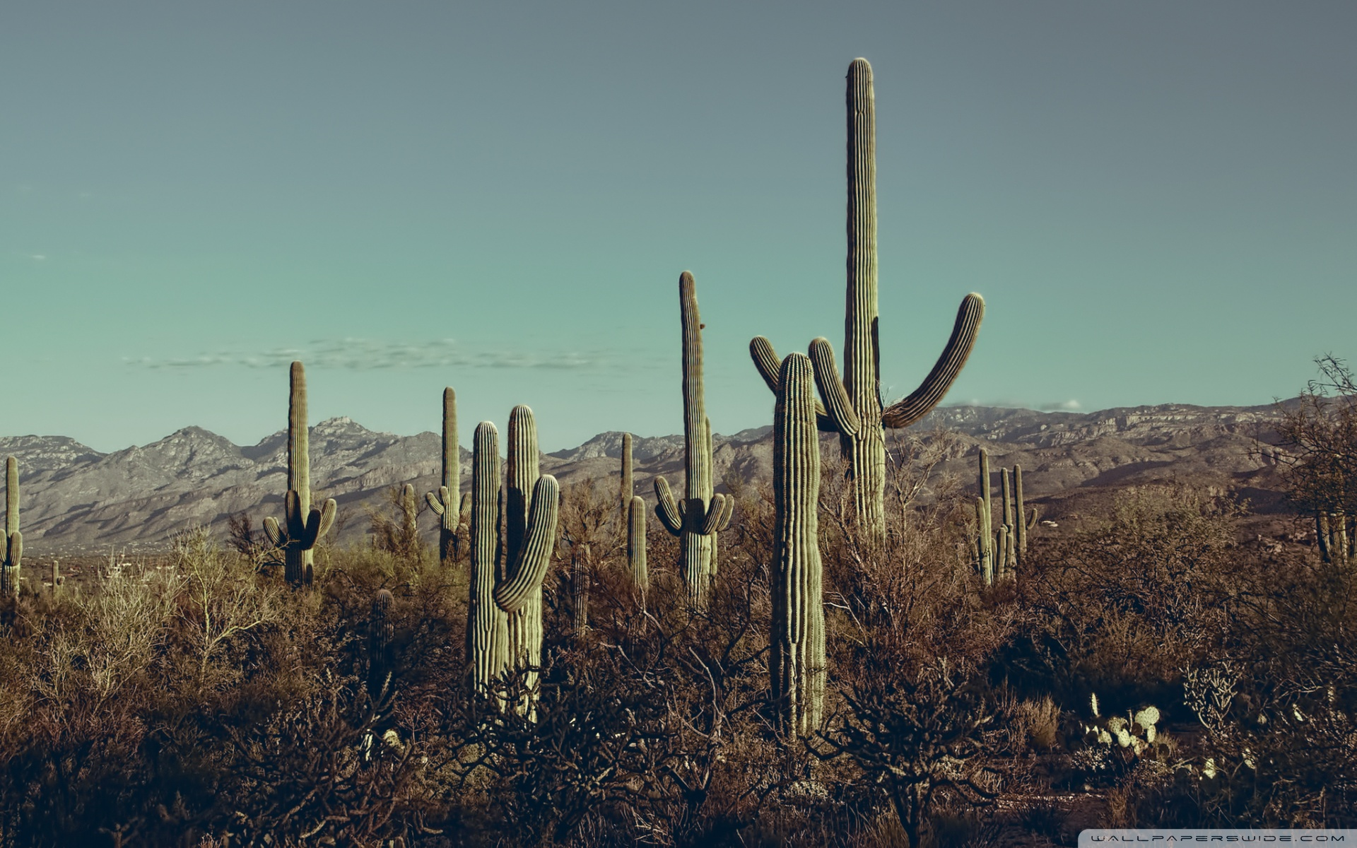 Saguaro National Park East Arizona 4K HD Desktop Wallpaper for 1920x1200