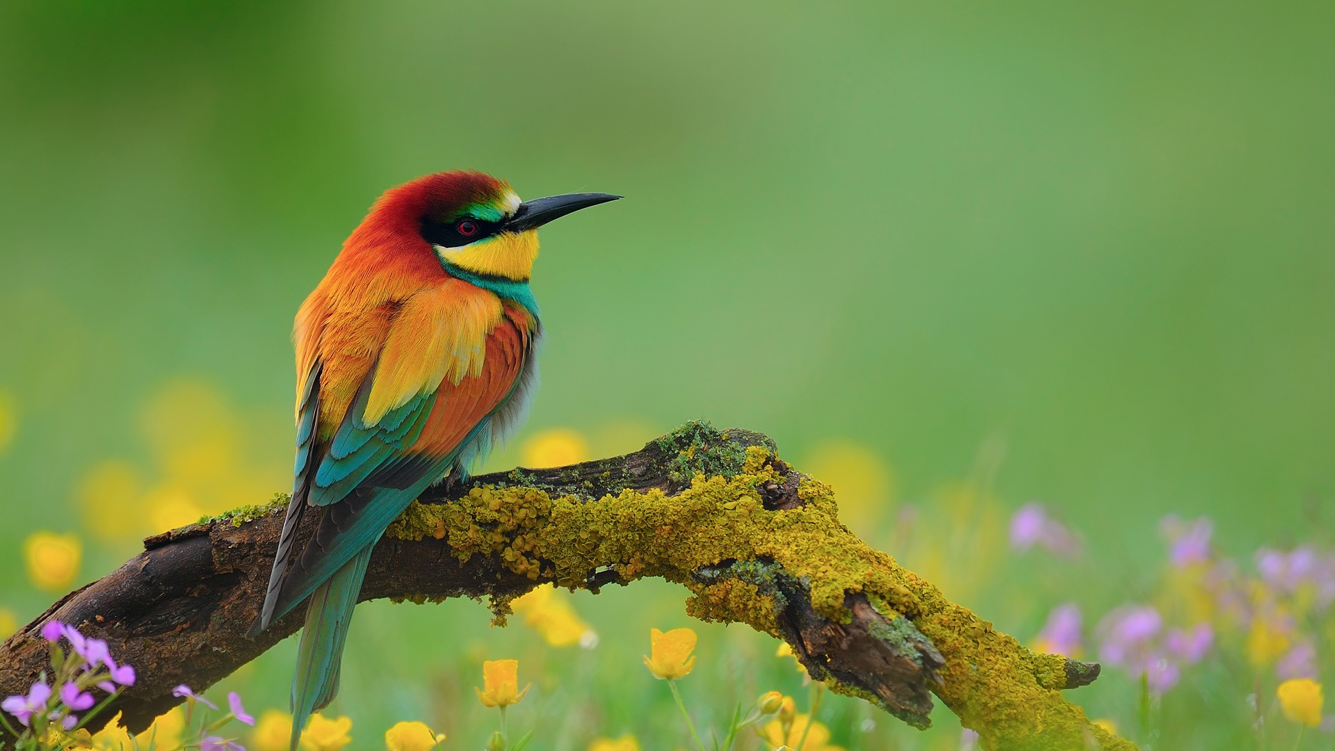 Birds 1080p Wallpaper  WallpaperSafari