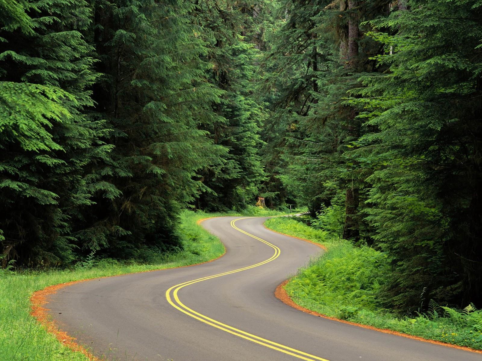 40 Beautiful Nature Wallpapers HD Amazing Funny Beautiful Nature 1600x1200