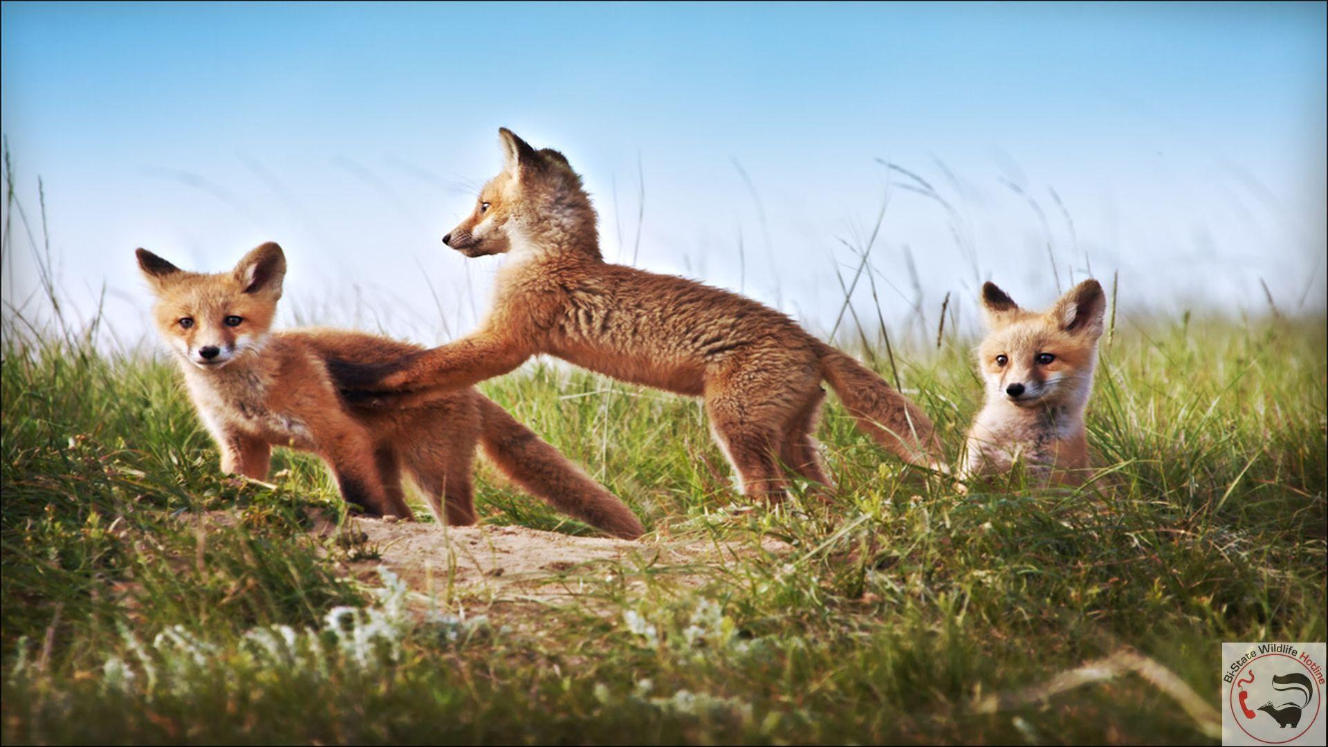 Missouri Wildlife Desktop Wallpaper 1920x1080
