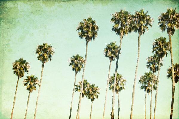 Palm Trees California Dreaming III Art Print by Mareike Bhmer 600x400
