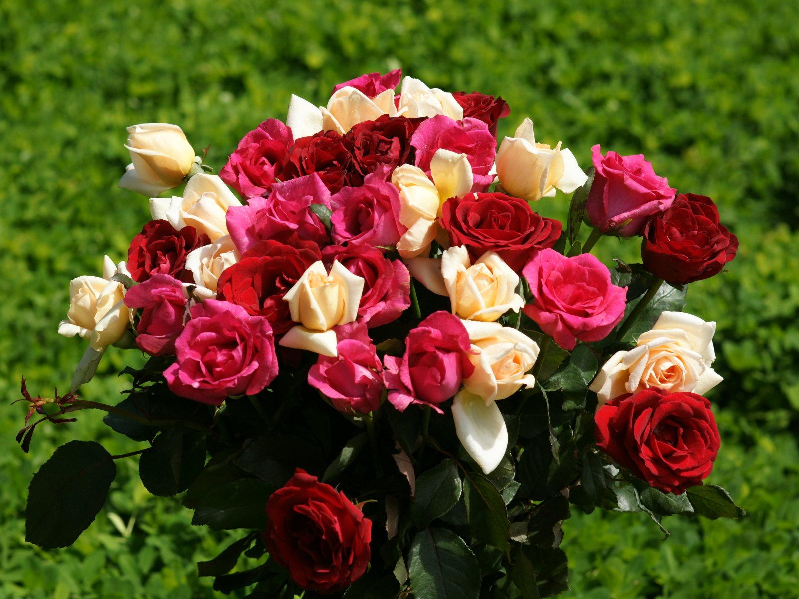images of roses wallpaper - wallpapersafari