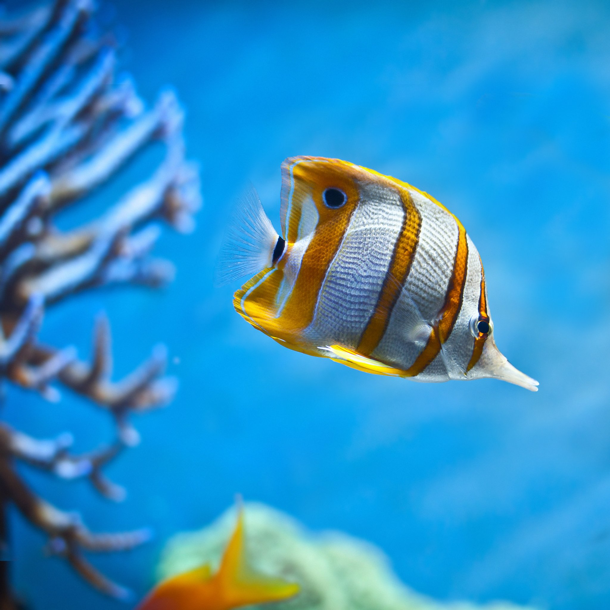 Tropical Fish Wallpaper for Computer - WallpaperSafari  Tropical Fish W...