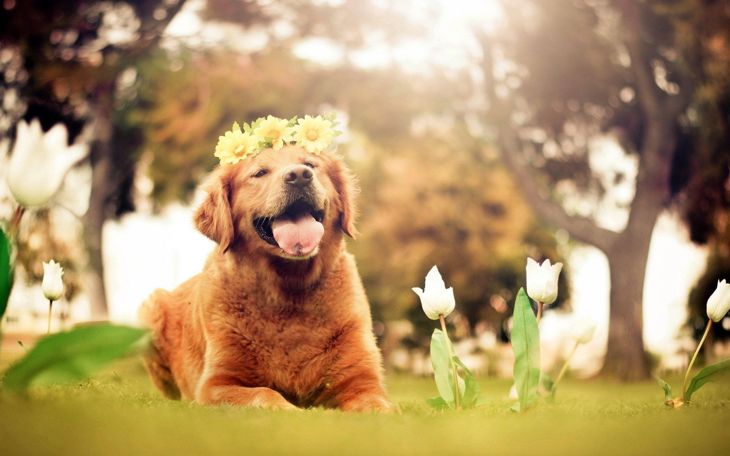Springtime Dog Wallpapers   Top Springtime Dog Backgrounds 2560x1600