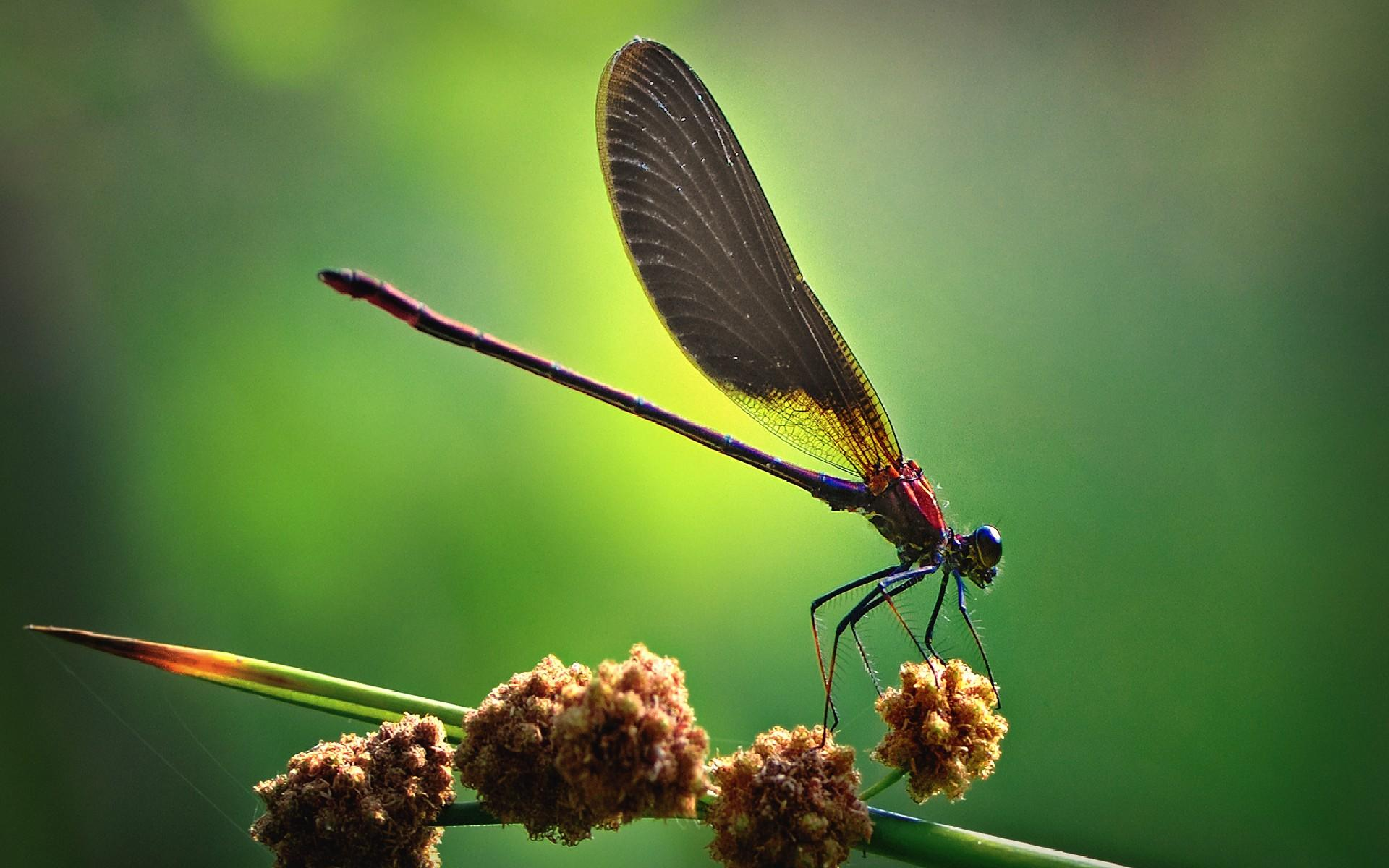 Cool Dragonfly Wallpaper Desktop h775292 Animals HD Wallpaper 1920x1200