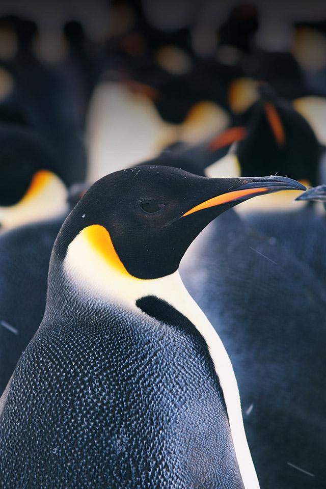 FREEIOS7 i am penguin   parallax HD iPhone iPad wallpaper 640x960