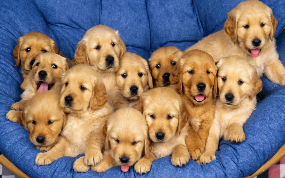 Free download Puppy Lite Live Wallpaper