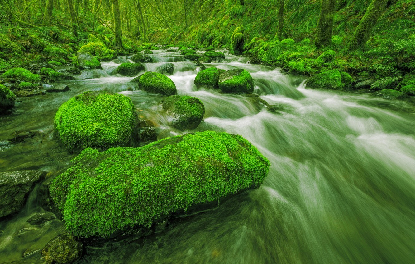 Wallpaper Greens Stream Trees Forest Stones Stream Moss 1332x850