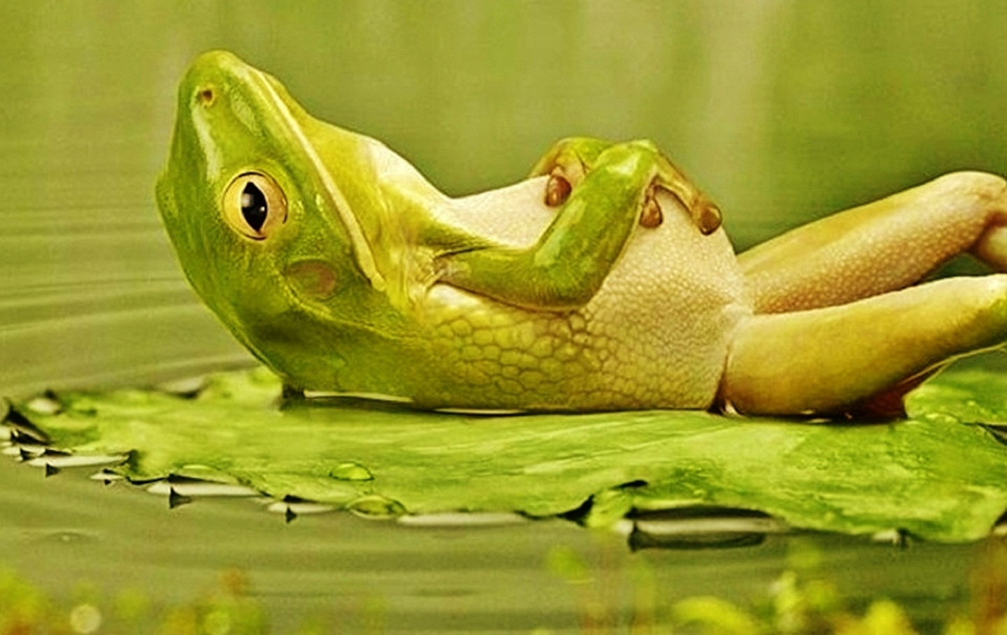 76 funny frog wallpaper on wallpapersafari - Funny frog pictures ...