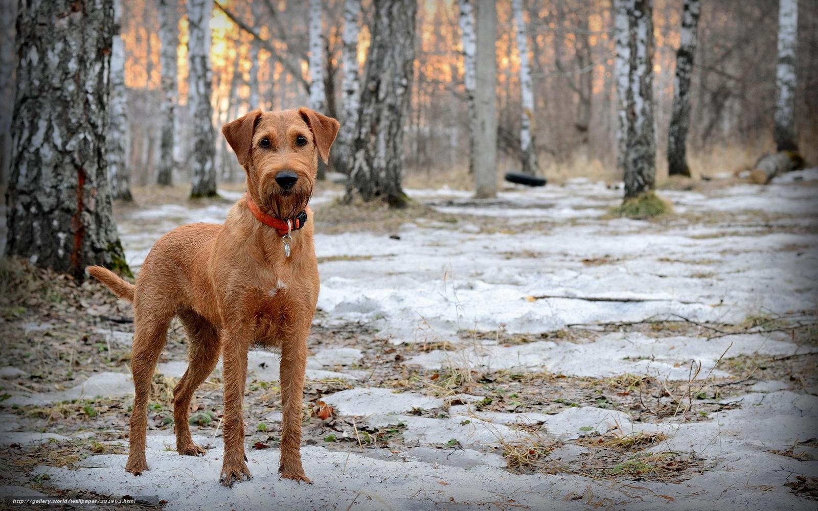 Download wallpaper dog friend forest spring desktop wallpaper 1600x1000