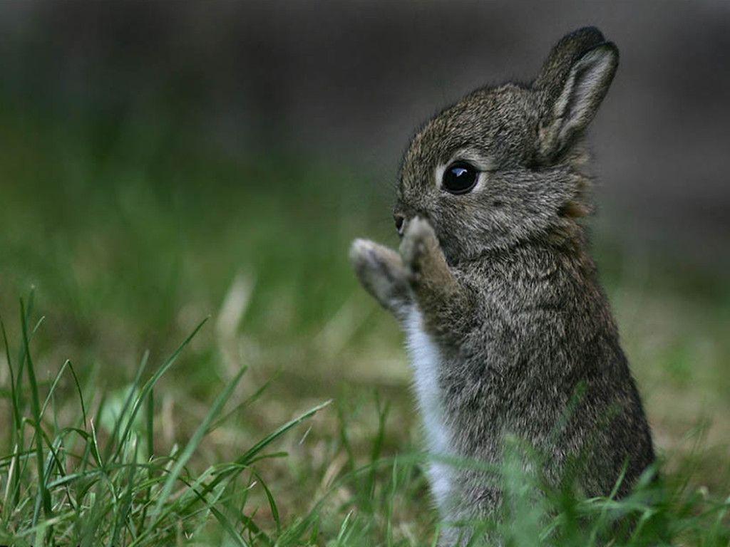 18561 bunny wallpaper 1024x768